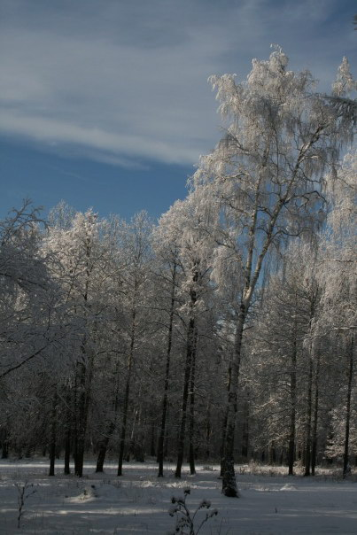 Зимний лес урала